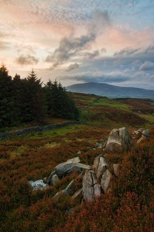 Gratis lagerfoto af bjerg, dagslys, græs, græsarealer