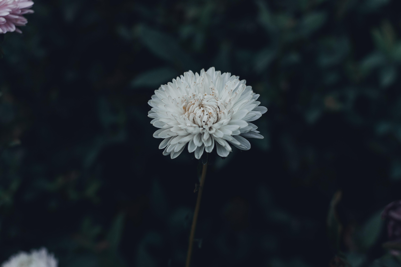 Gratis lagerfoto af 4k-baggrund, blomster, blomstrende, close-up