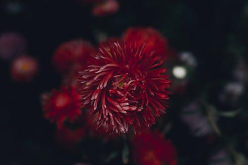 Photos gratuites de centrales, fleur, fleurir, flore