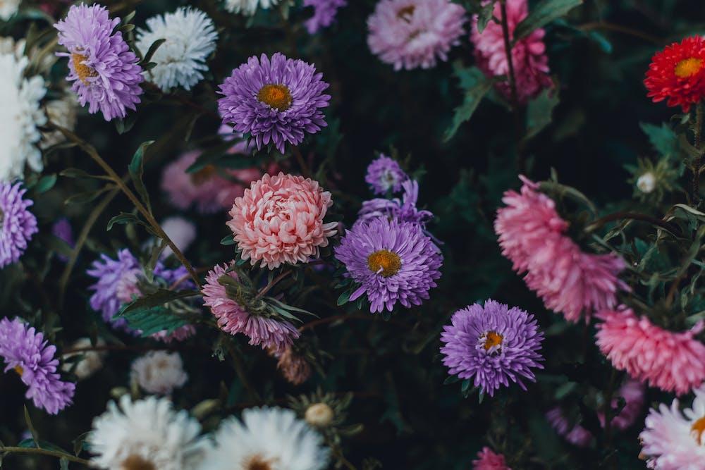 Perennial Flowers | Flower Gardening For Beginners: A Guide To Growing Your Dream Garden
