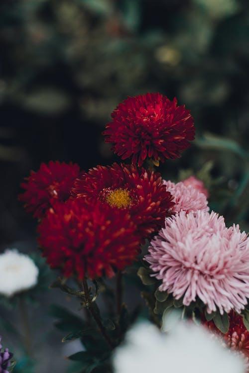 Kostnadsfri bild av anläggning, blommor, flora, kronblad