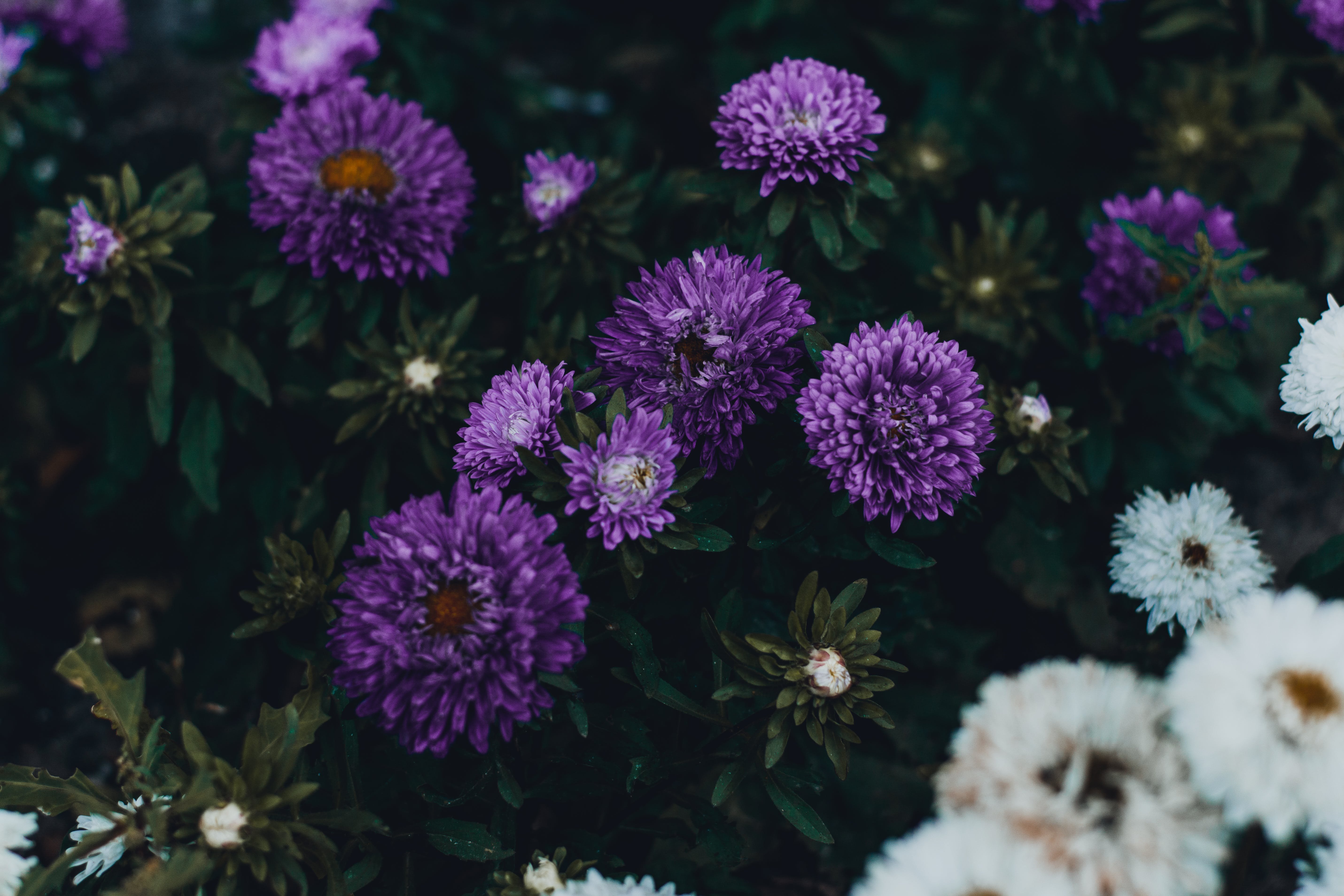 Photo of Violet Flowers
