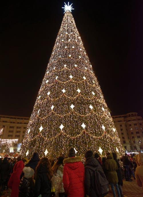 Photo of Huge Christmas Tree