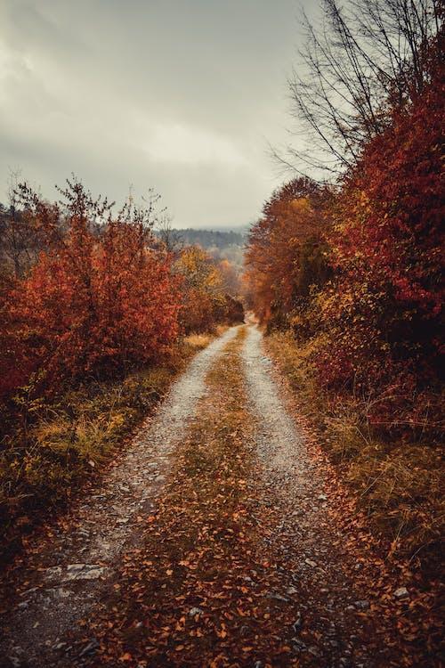 Foto stok gratis berawan, hutan, jalur, Jeruk