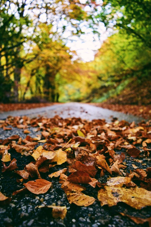 Selective Focus Photography Of Leaves On Road