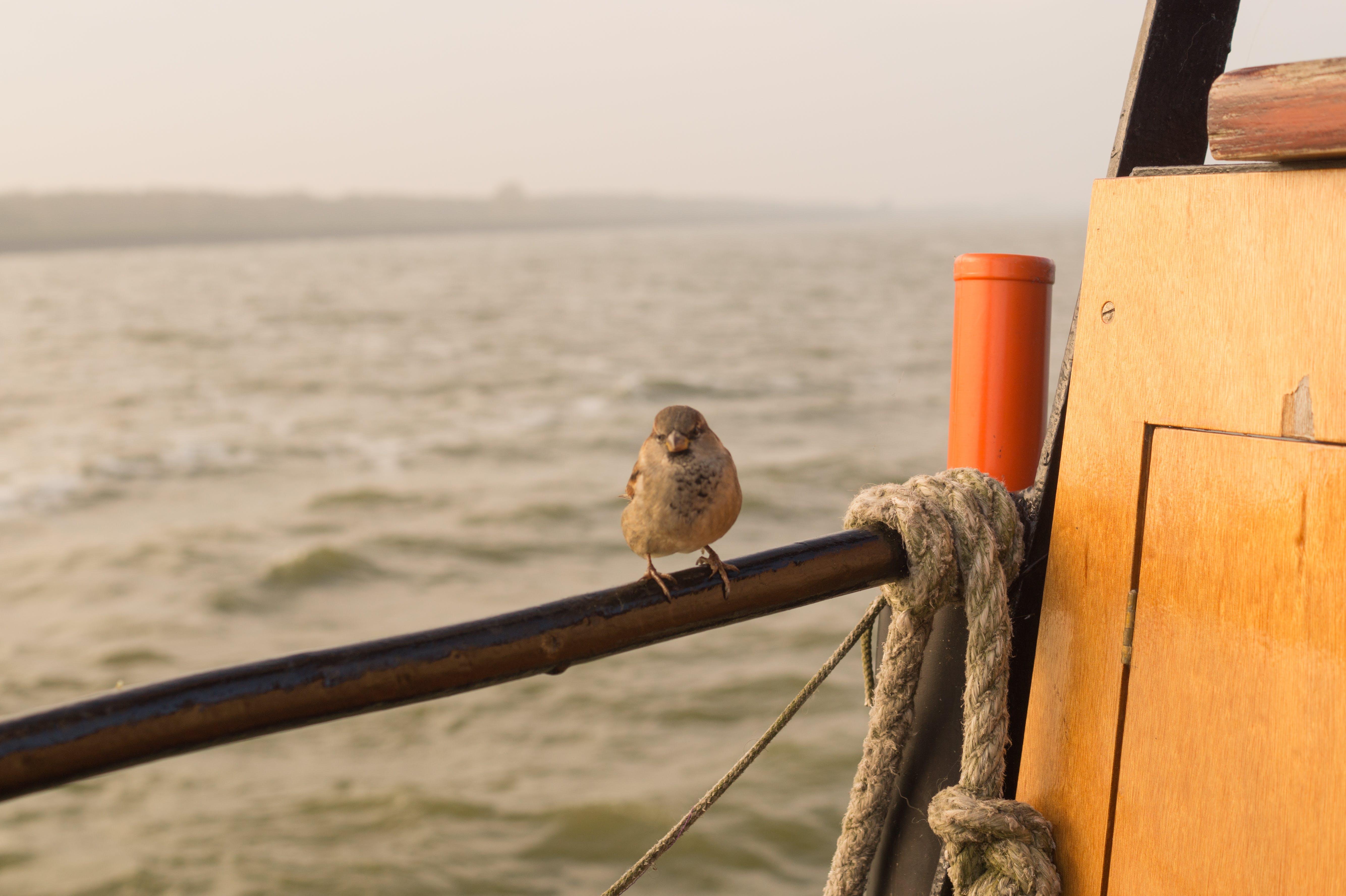 Free stock photo of sea, bird, boat, animal