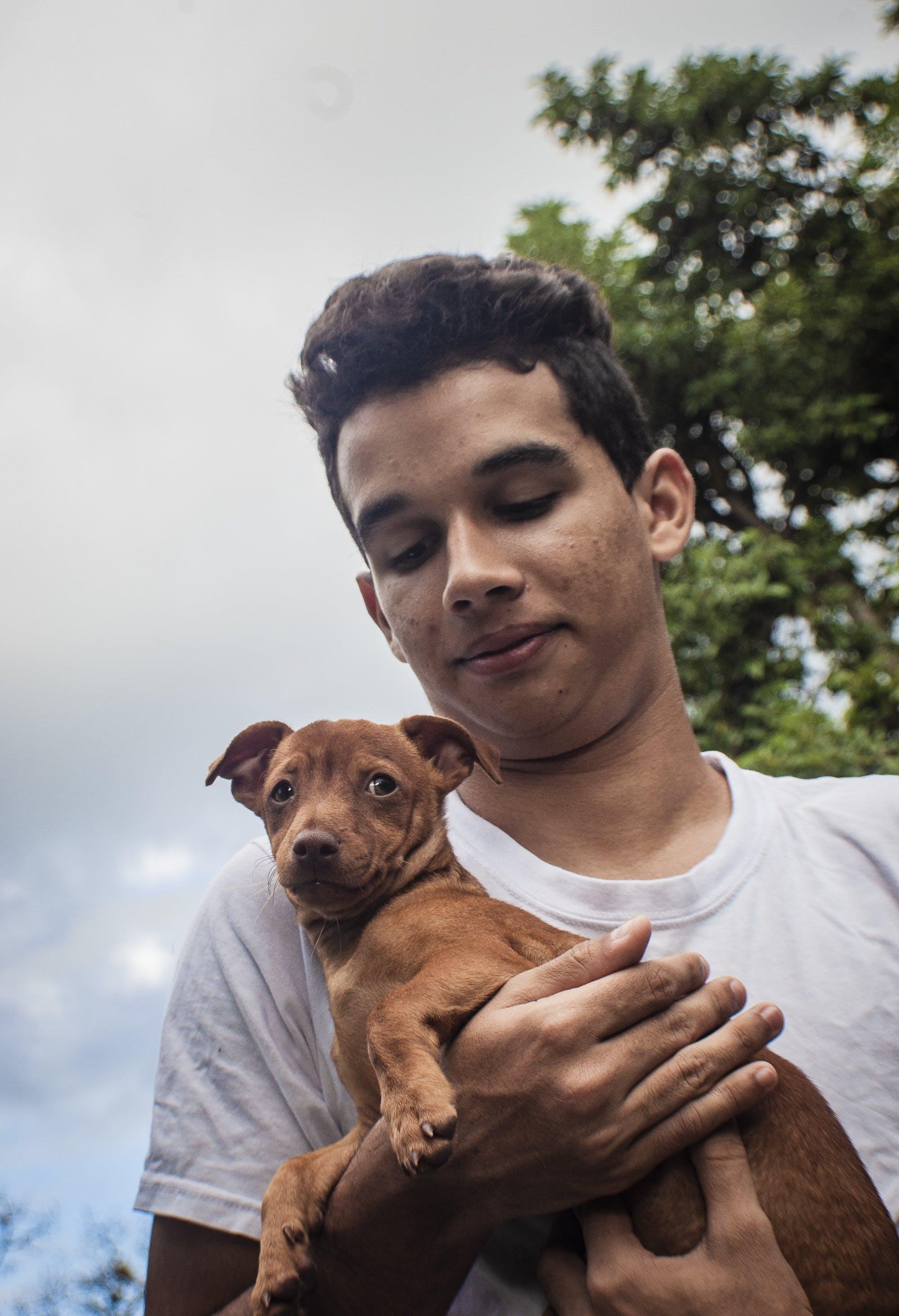 Free stock photo of cielo, Mascota, perro, pet portrait