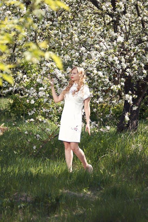 건초지, 공원, 꽃, 나무의 무료 스톡 사진