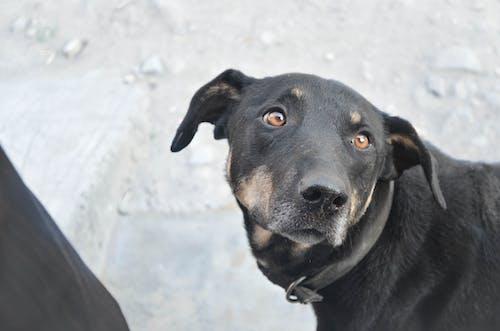 Free stock photo of abandoned, dog, pet