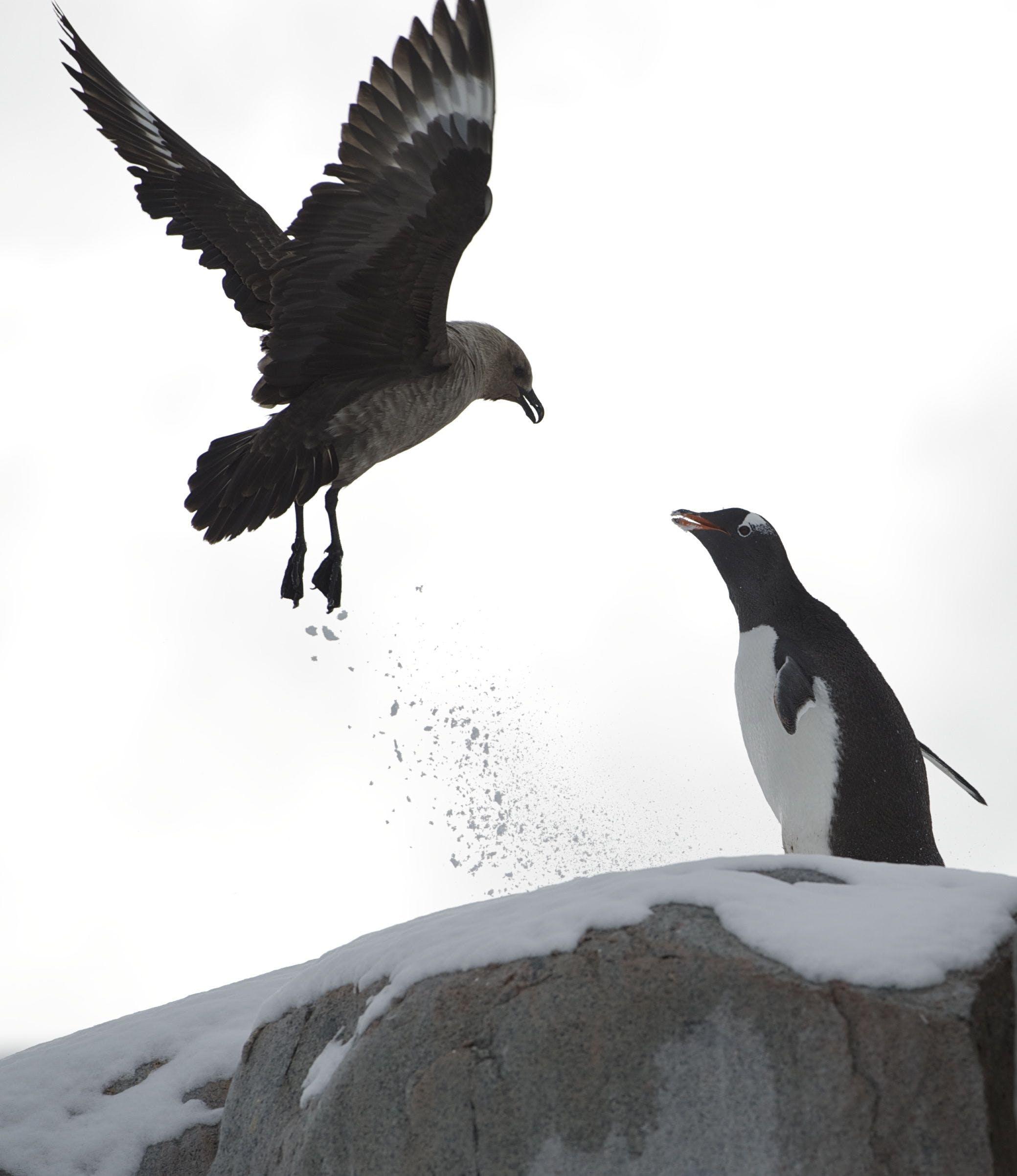 Penguin Near Black Bird