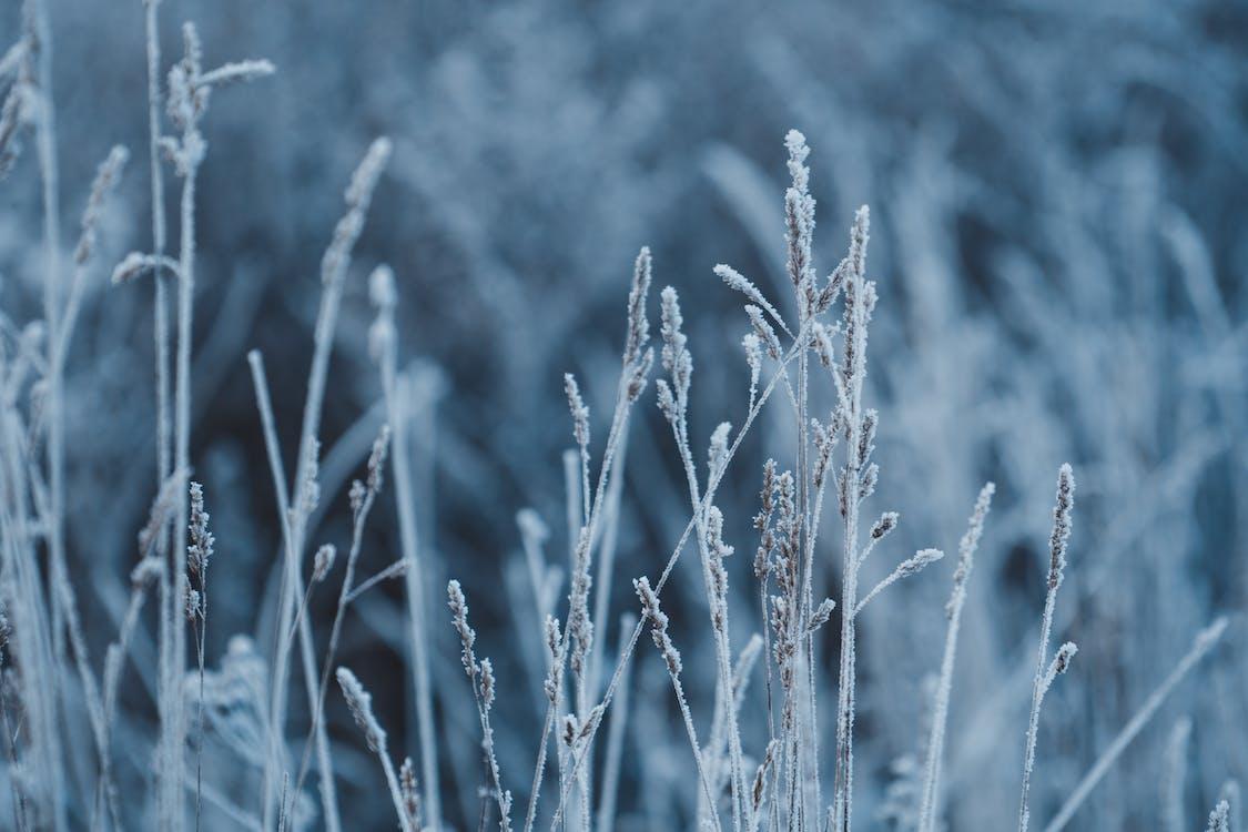 frost, gras, kalt
