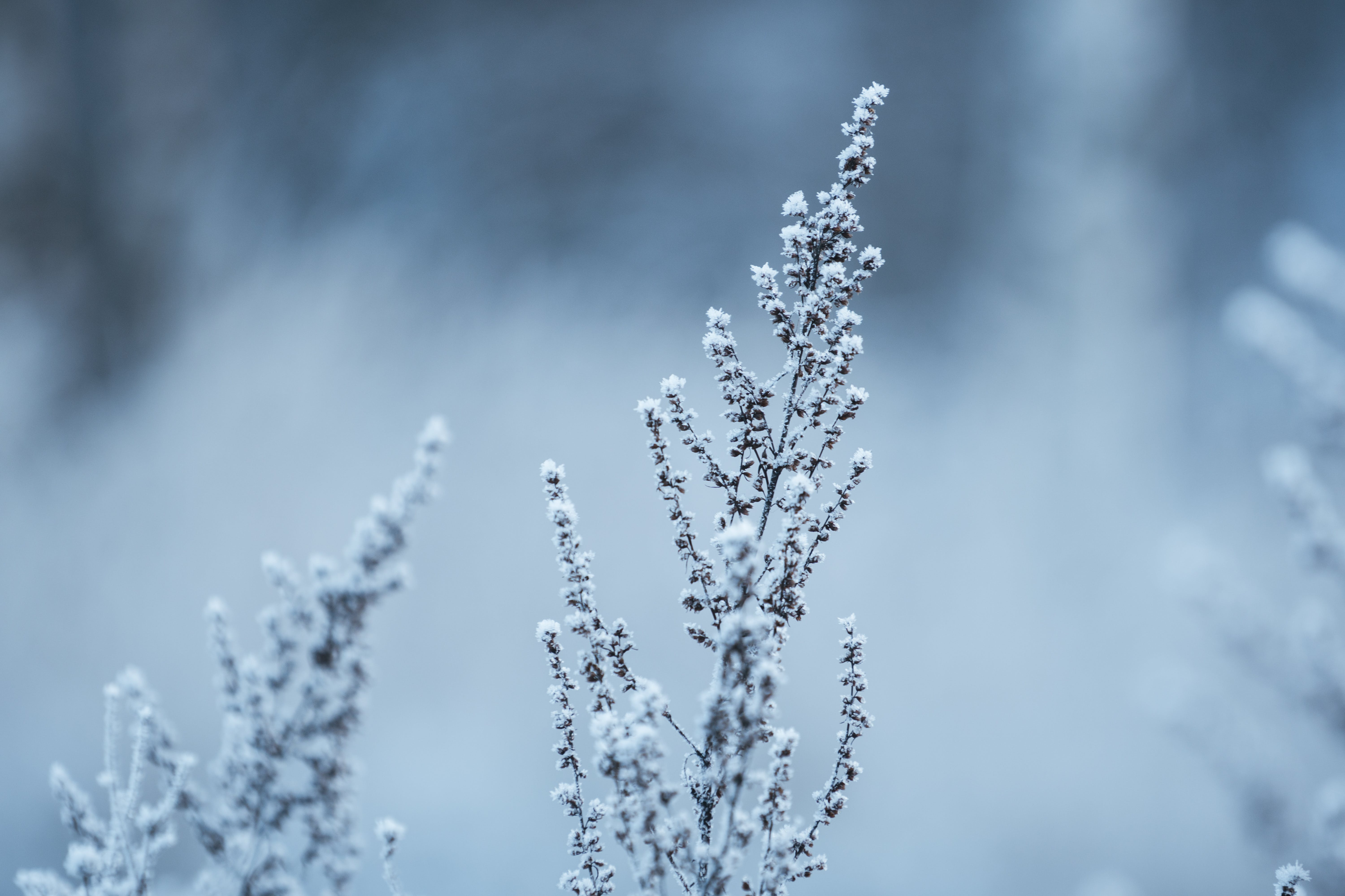 Green Leafed Plant Covered by Snow