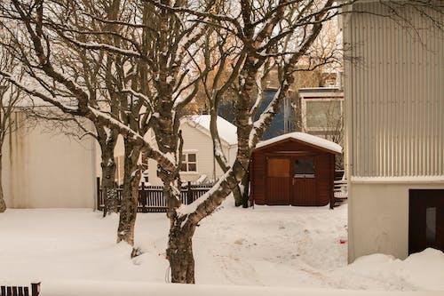 คลังภาพถ่ายฟรี ของ ฤดูหนาว, หิมะ, เรคยาวิก