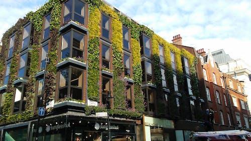 Free stock photo of green wall, london
