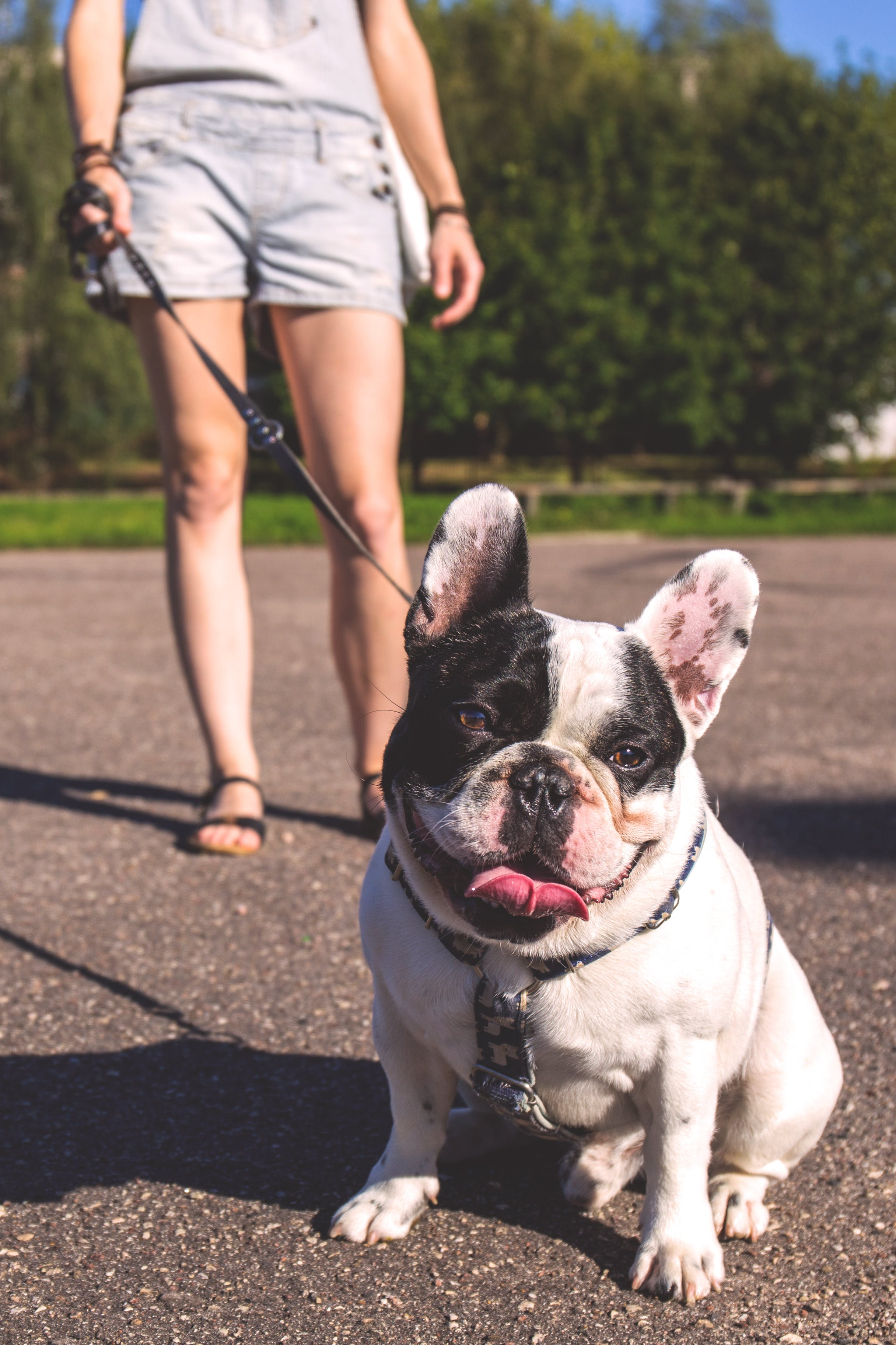 Woman Walking on the Street With Her Black and White Bulldog