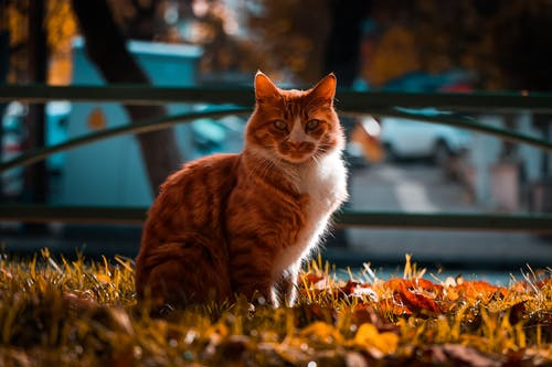 Selective Focus Photography of a Tabby Cat