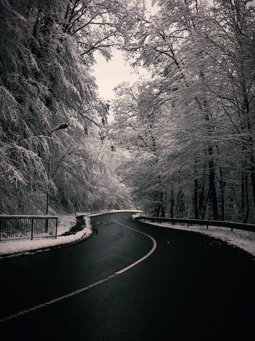 4k 桌面, 冬季, 冬季仙境, 冬季景觀 的 免费素材照片