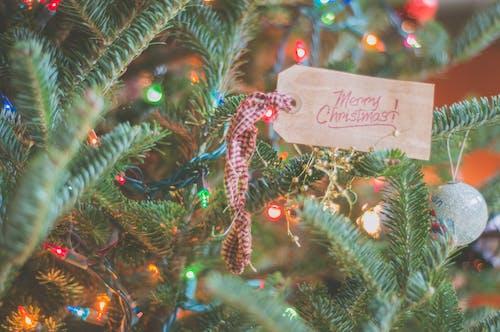 Focus Photography Of Merry Christmas Tag On Christmas Tree