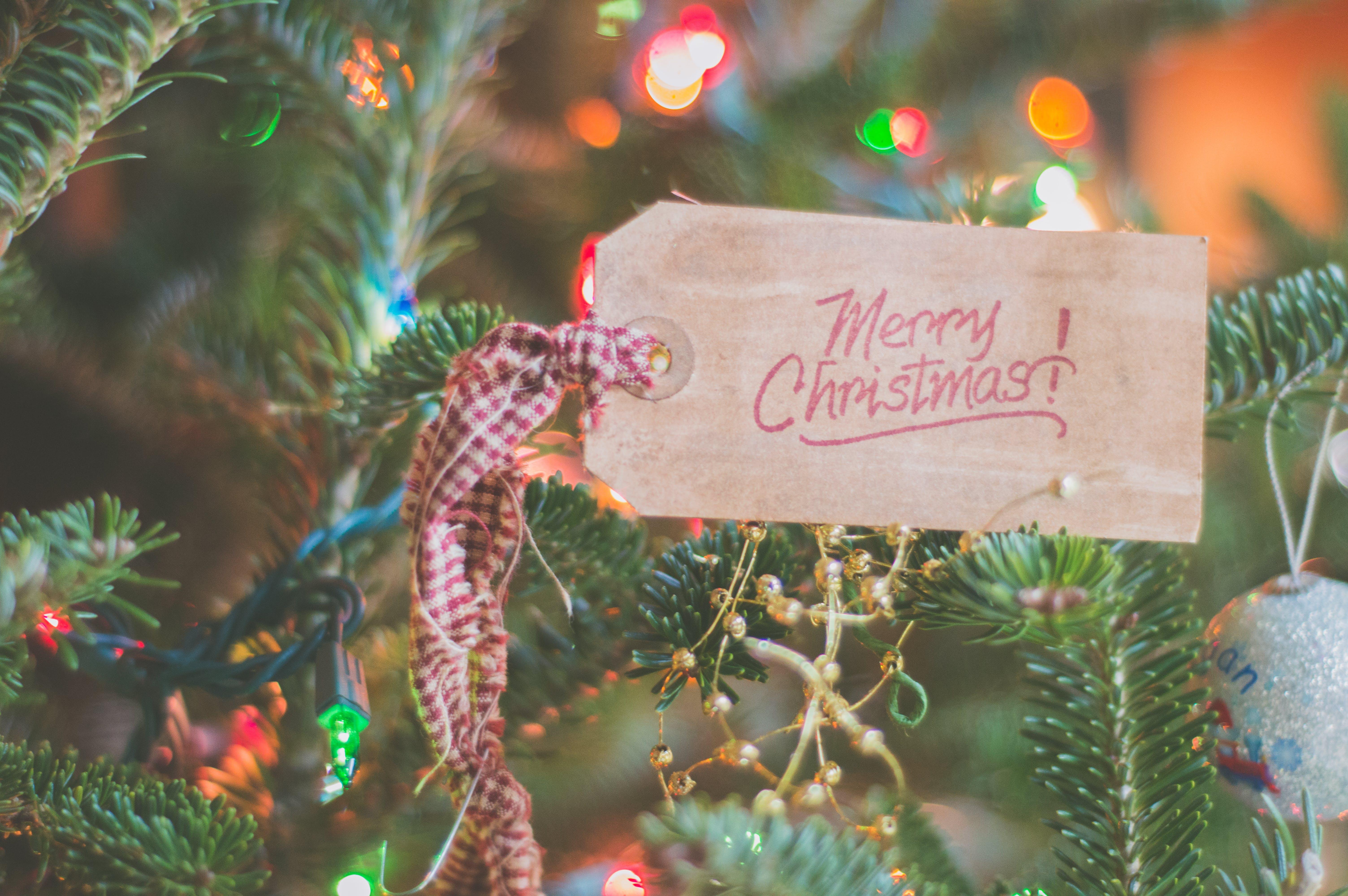 background, berries, christmas