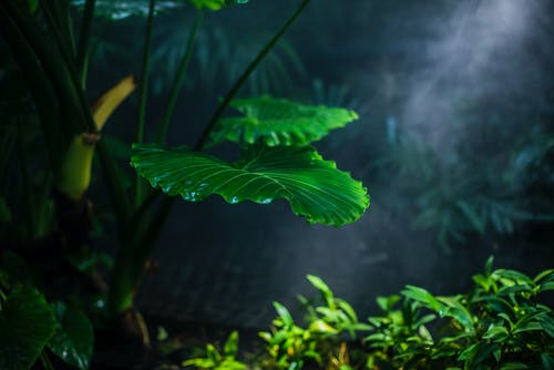 Gratis lagerfoto af blade, drivhus, have, makro