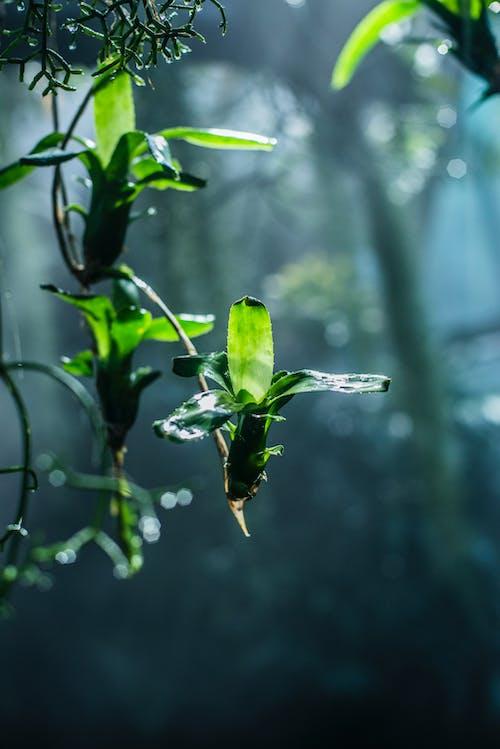 Ảnh lưu trữ miễn phí về hệ thực vật, màu, màu xanh lá, môi trường