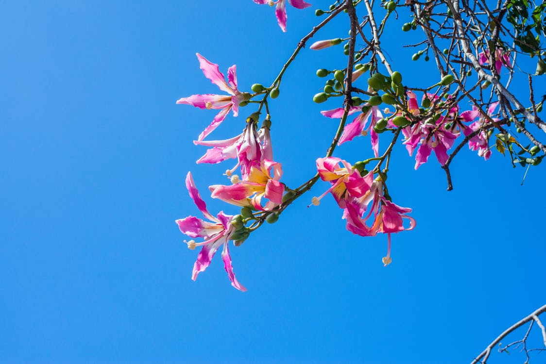 flóra, kytka, letní květiny