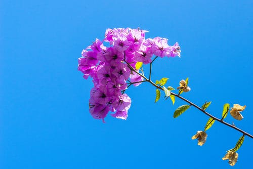 Free stock photo of branch, flora, flower, nature