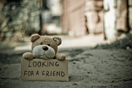 Looking for a Friend Bear