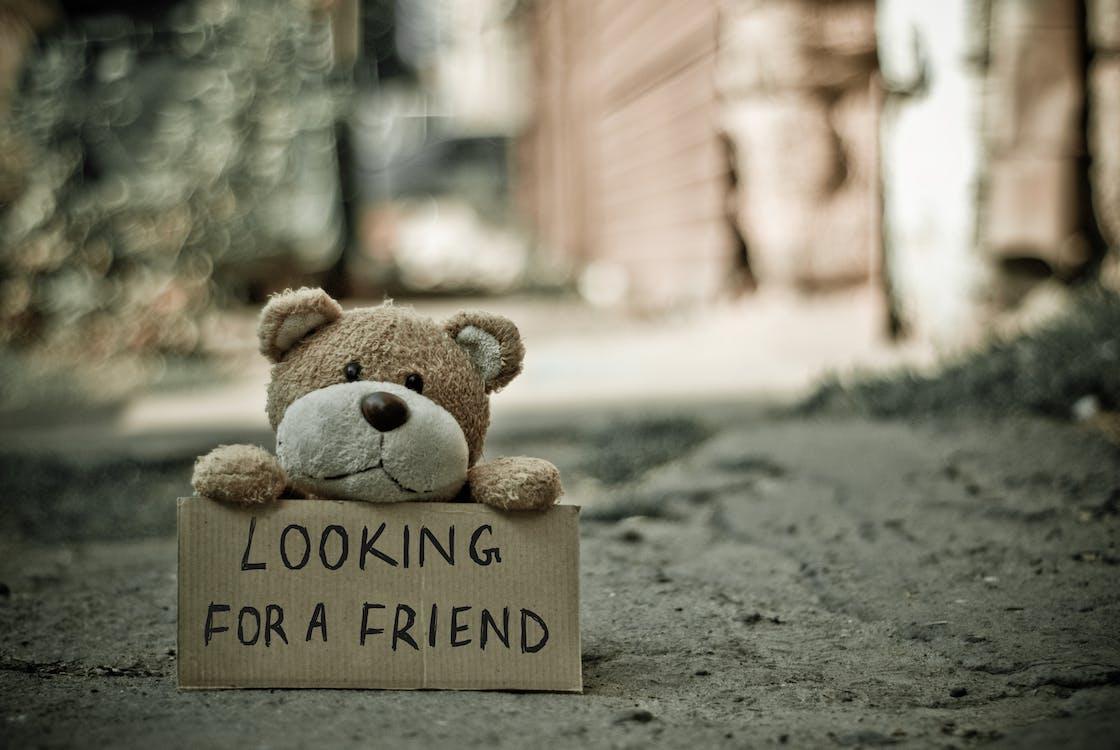 Buscando Un Oso Amigo