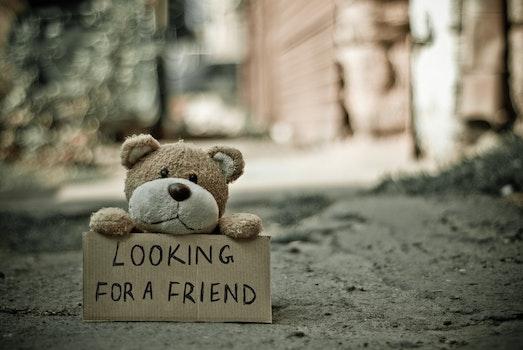 Kostenloses Stock Foto zu kuscheltier, teddybär, spielzeug, draußen