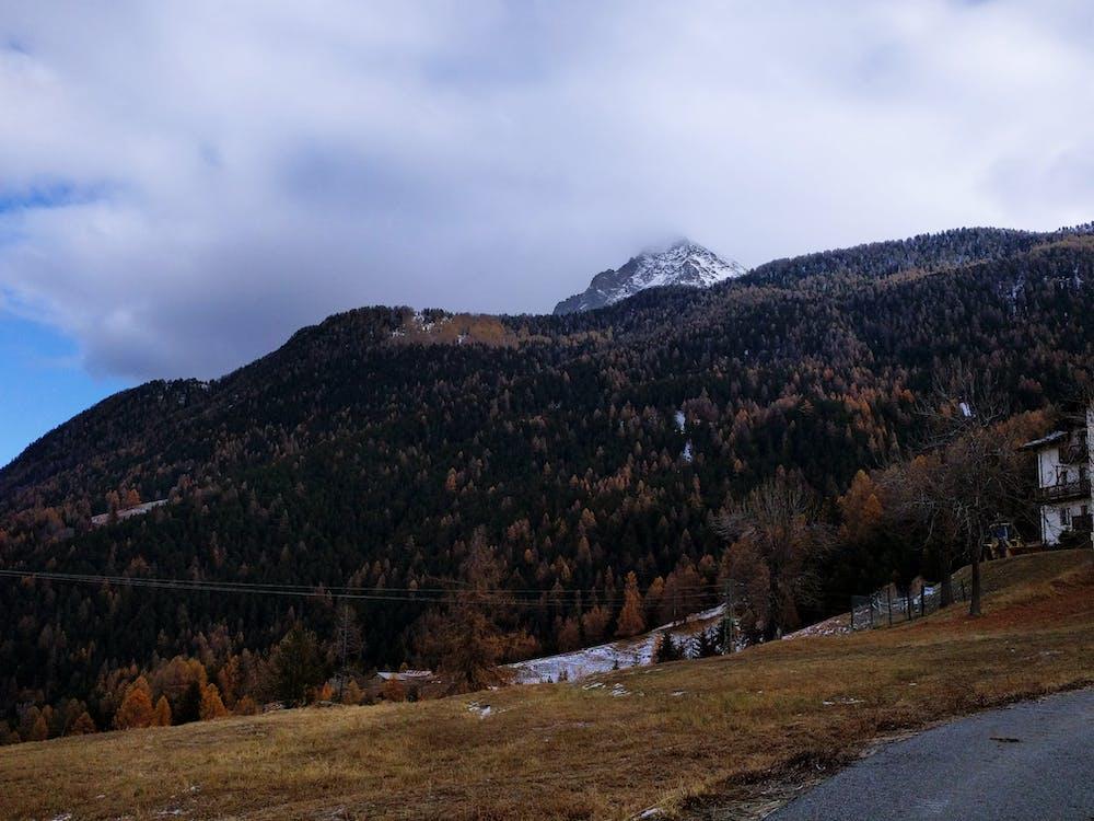 αυγή, βουνό, γρασίδι