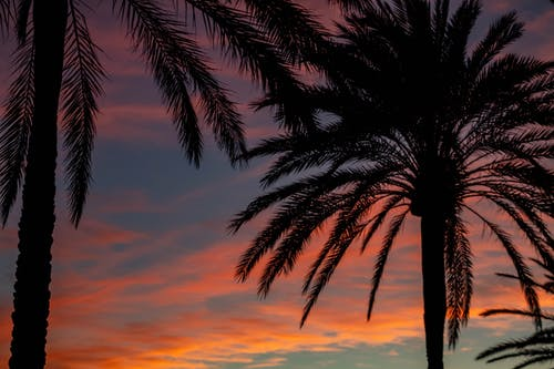 Silhouette Photo of Palm Trees During Dawn