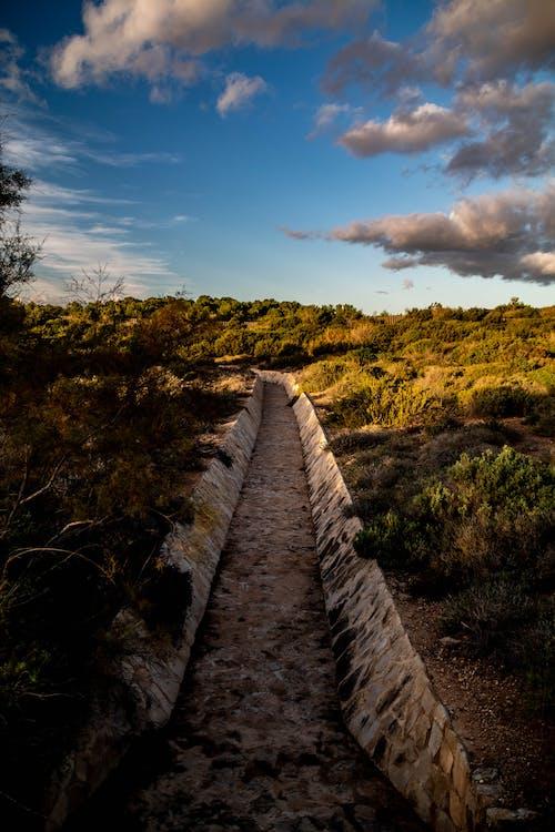 Foto d'estoc gratuïta de aigua, arbres, boscos, herba