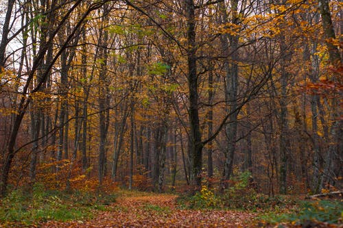 Free stock photo of autumn mood forest, forest, mood