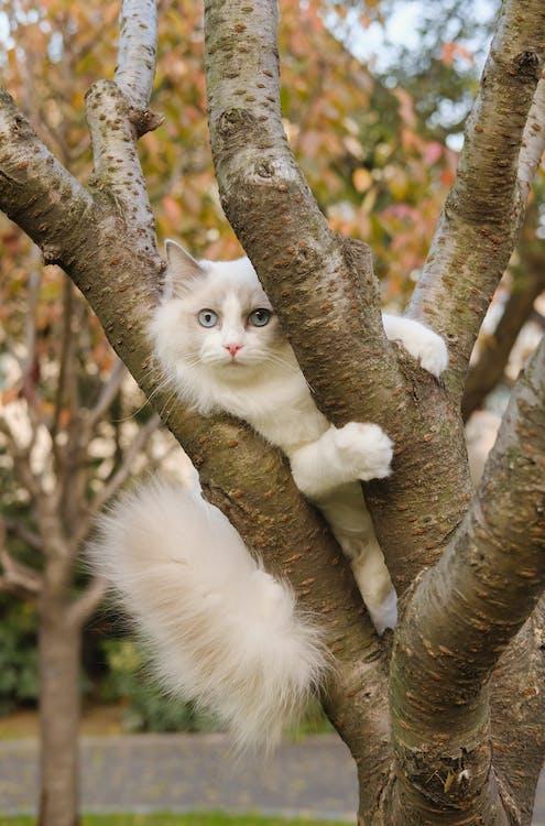 Photo of Cat Climbing on Tree