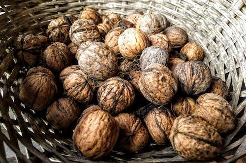 Foto stok gratis kacang kenari, kacang-kacangan, menyimpan, panen