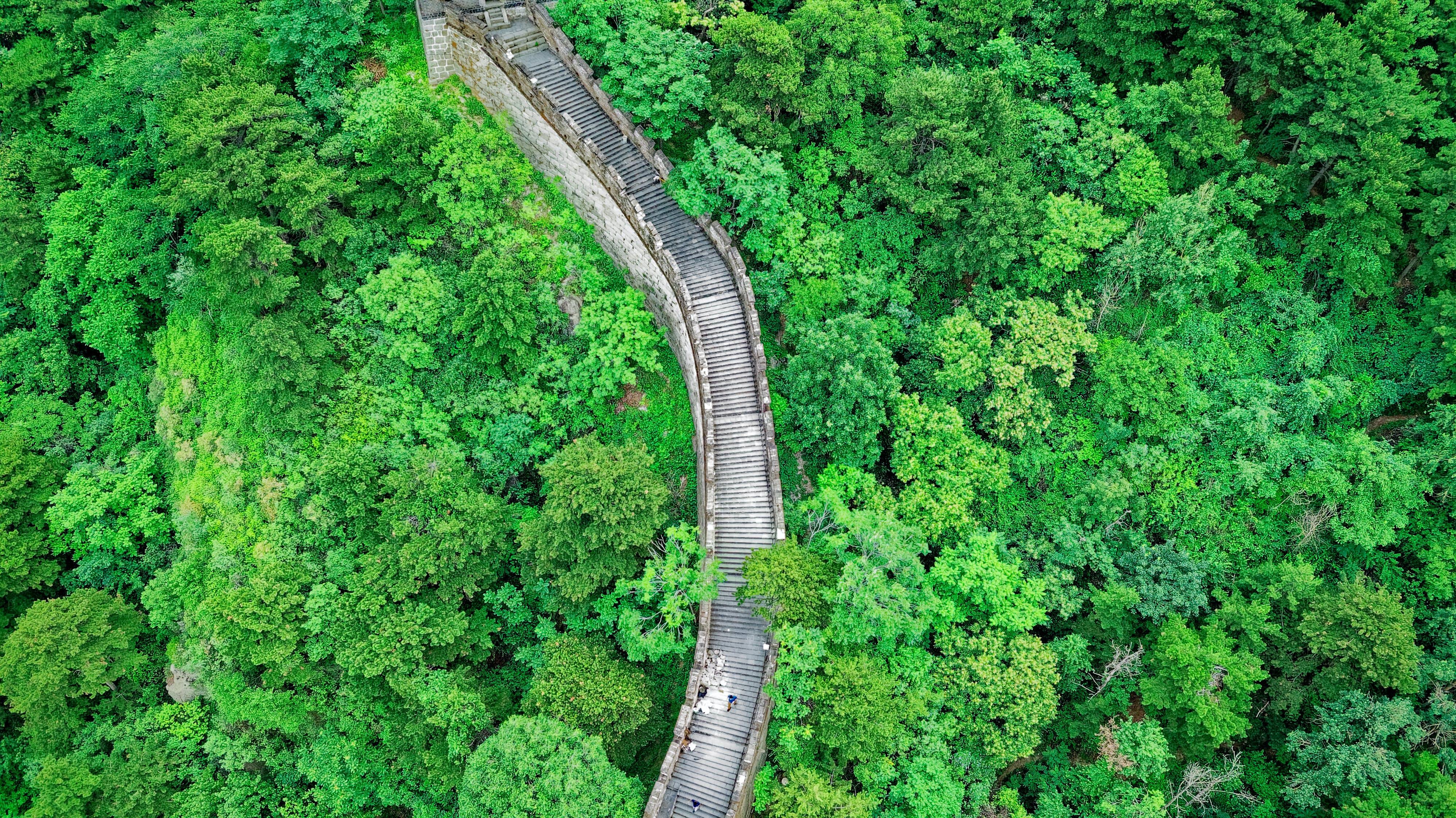 Fotos de stock gratuitas de antiguo, arboles, bosque, China