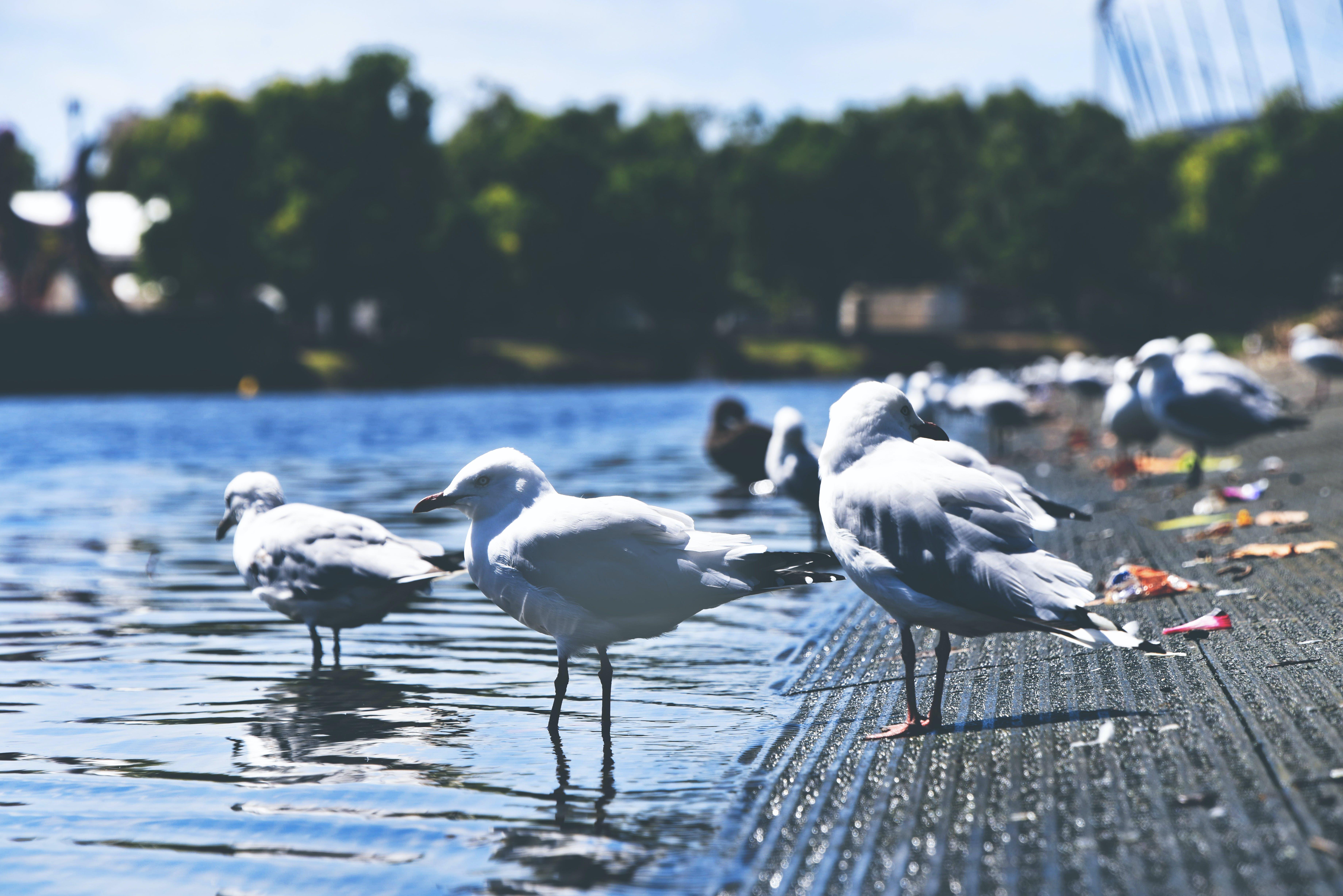Flock of Sea Gulls on Seashore