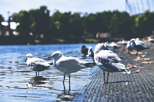 Photos gratuites de ailes, animaux, arbres, arrière-plan flou
