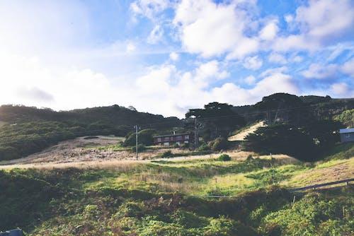ağaçlar, bulutlar, çim, çimenlik içeren Ücretsiz stok fotoğraf