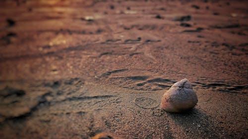 Základová fotografie zdarma na téma #beach #sunset #snail # písek
