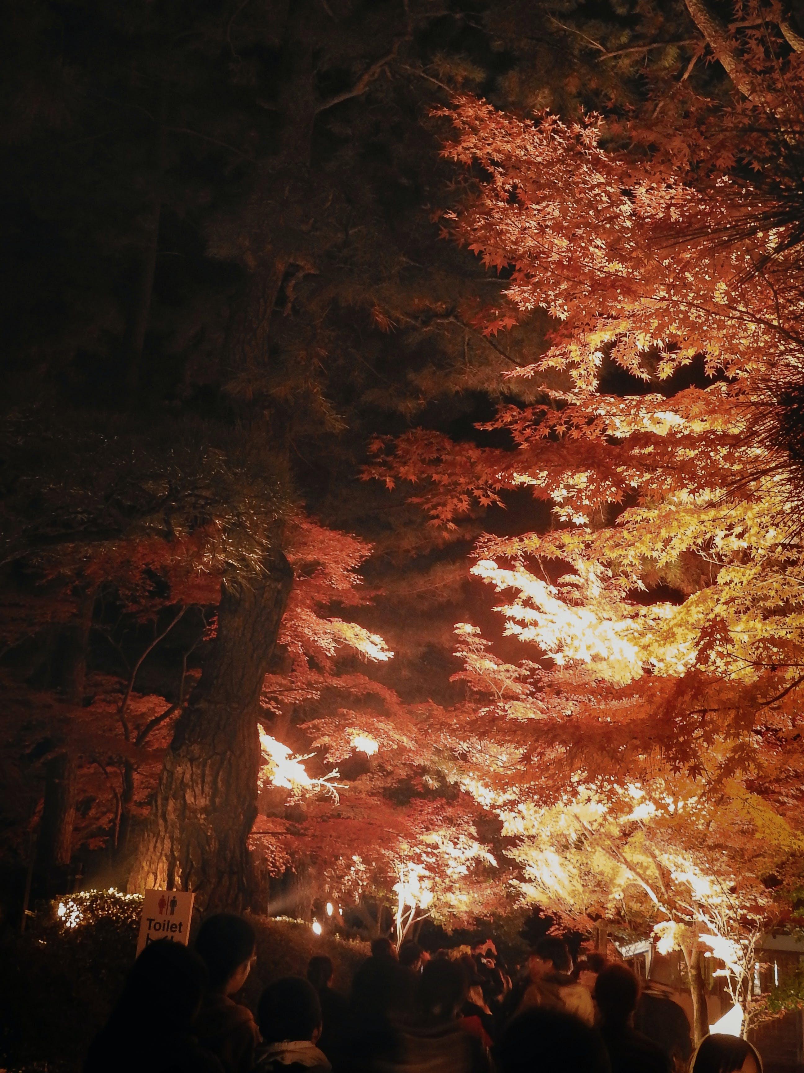Free stock photo of autumn, japan, night