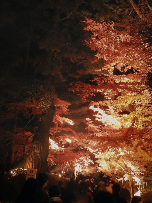 Photos gratuites de japon, nuit