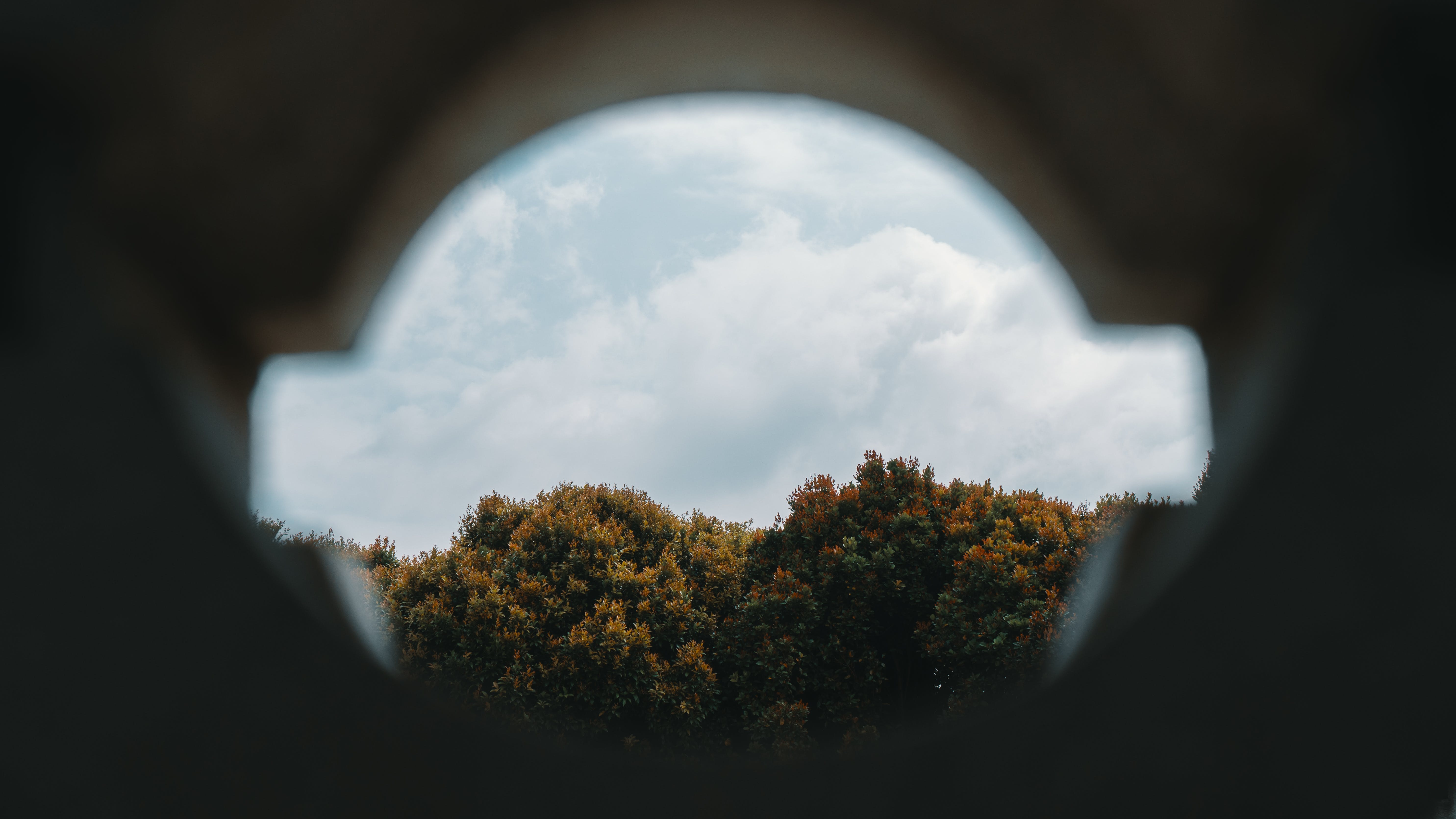 Fish Eye Photography of Trees Under White Clouds