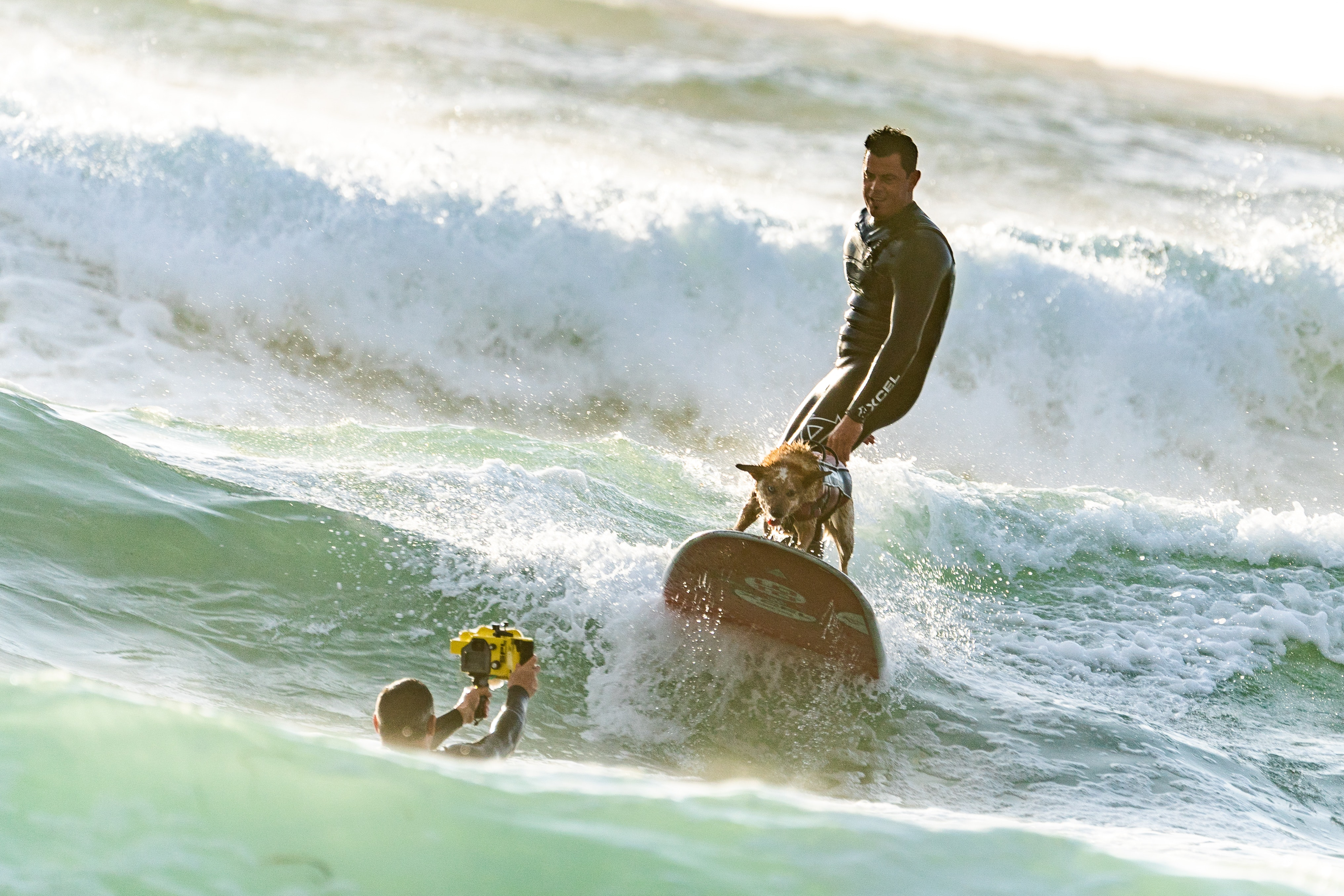 Surfer with his surfer dog surfing · free stock photo.