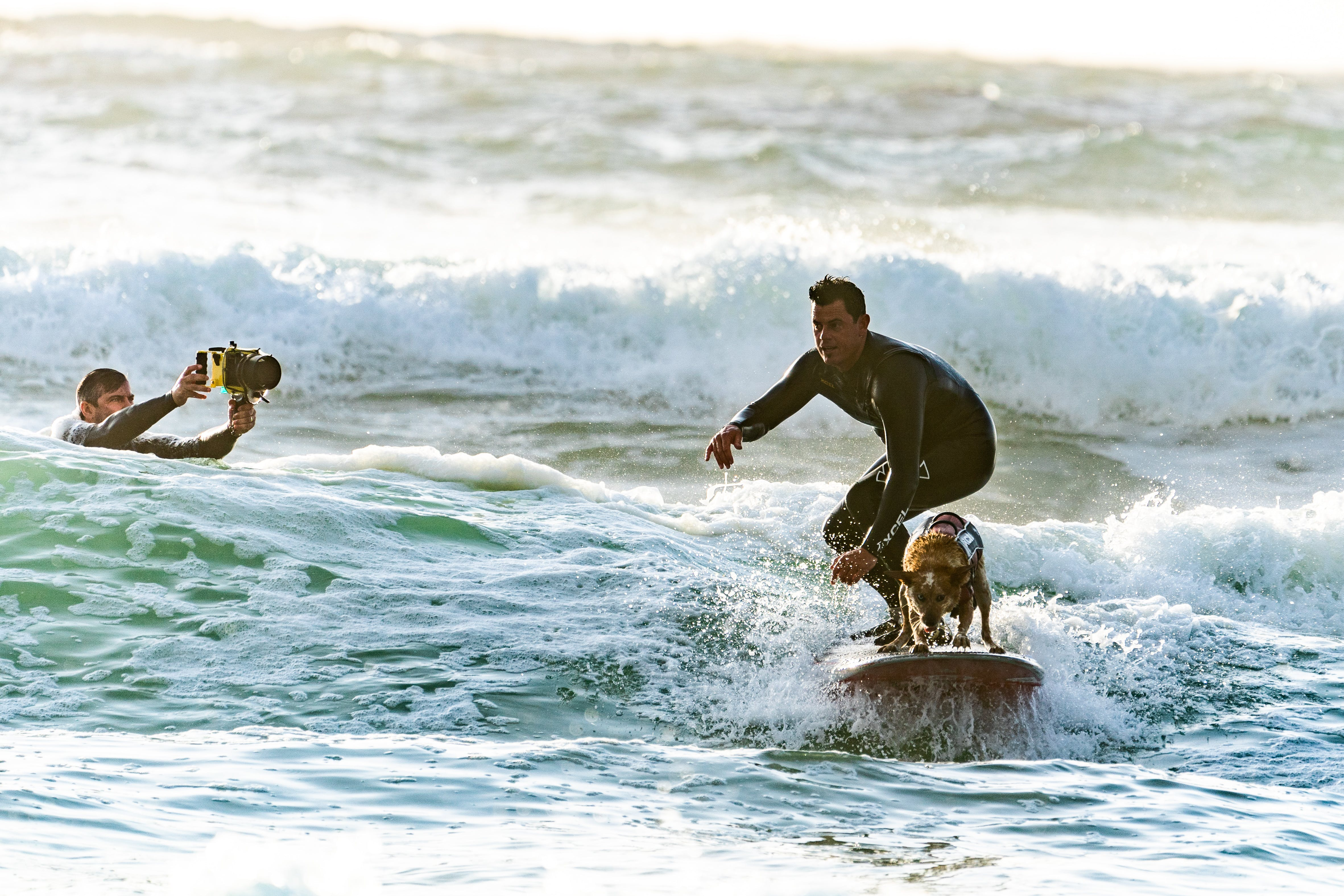 Surfer Surfing with his Surfer Dog