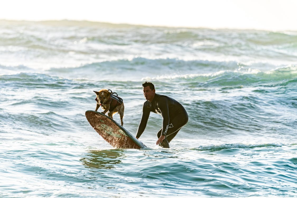 Surfer and his Dog on a Surf Board