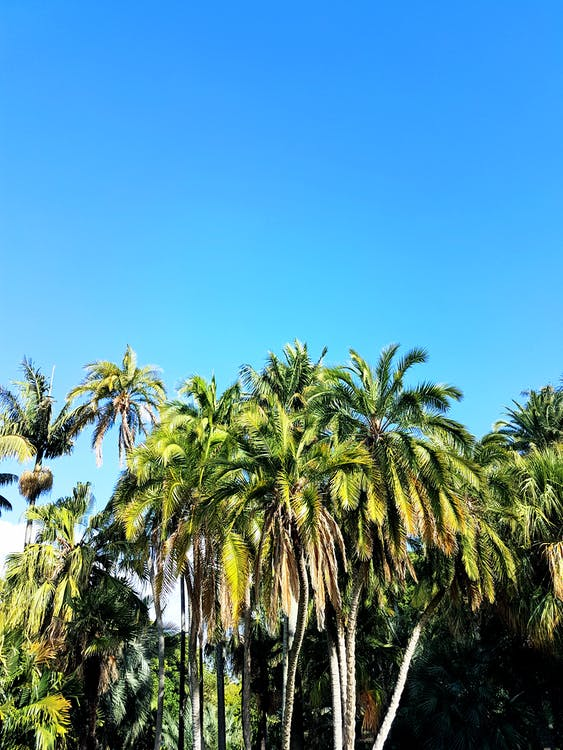 exotisk, himmel, kokospalmer