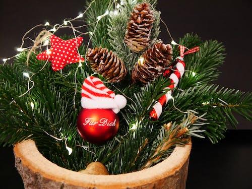 Darmowe zdjęcie z galerii z boże narodzenie, dekoracja świąteczna, lampki, świętowanie