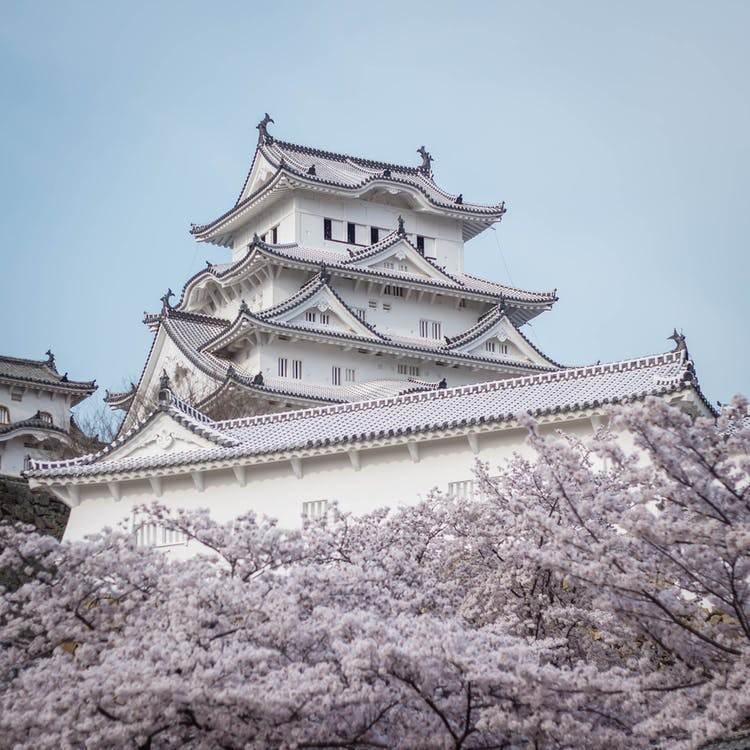 Photo of Himeji Castle Behind White Cherry Blossoms